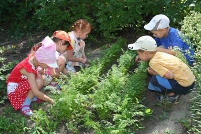 Правила детям при работе на огороде в детском саду